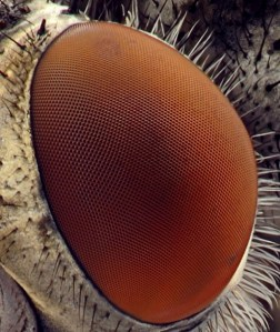 Microscope-Exploring-the-Beauty-in-3D-Images-019