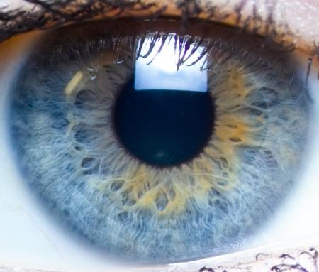 Iris_close-up